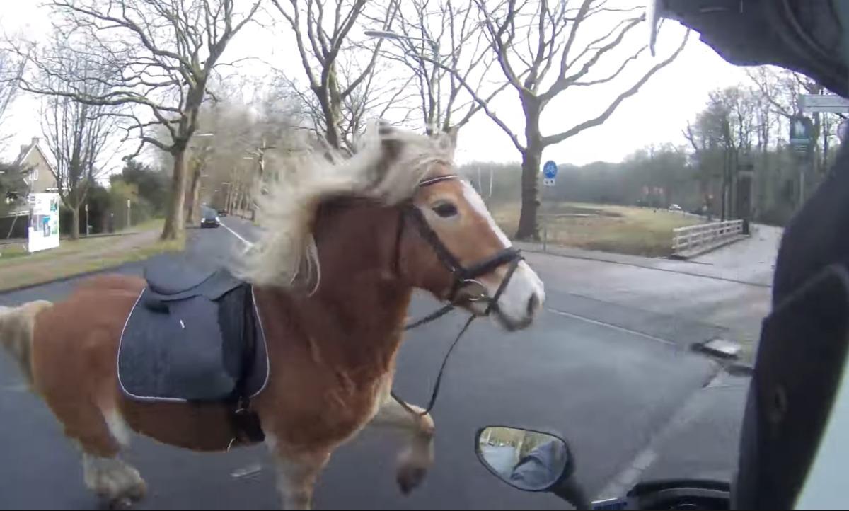 Jófej robogós segített befogni az elszabadult lovat az év motoros üldözésében