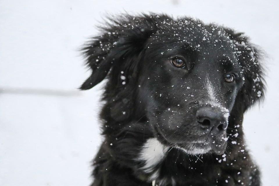 Több helyen havazott az országban – videó