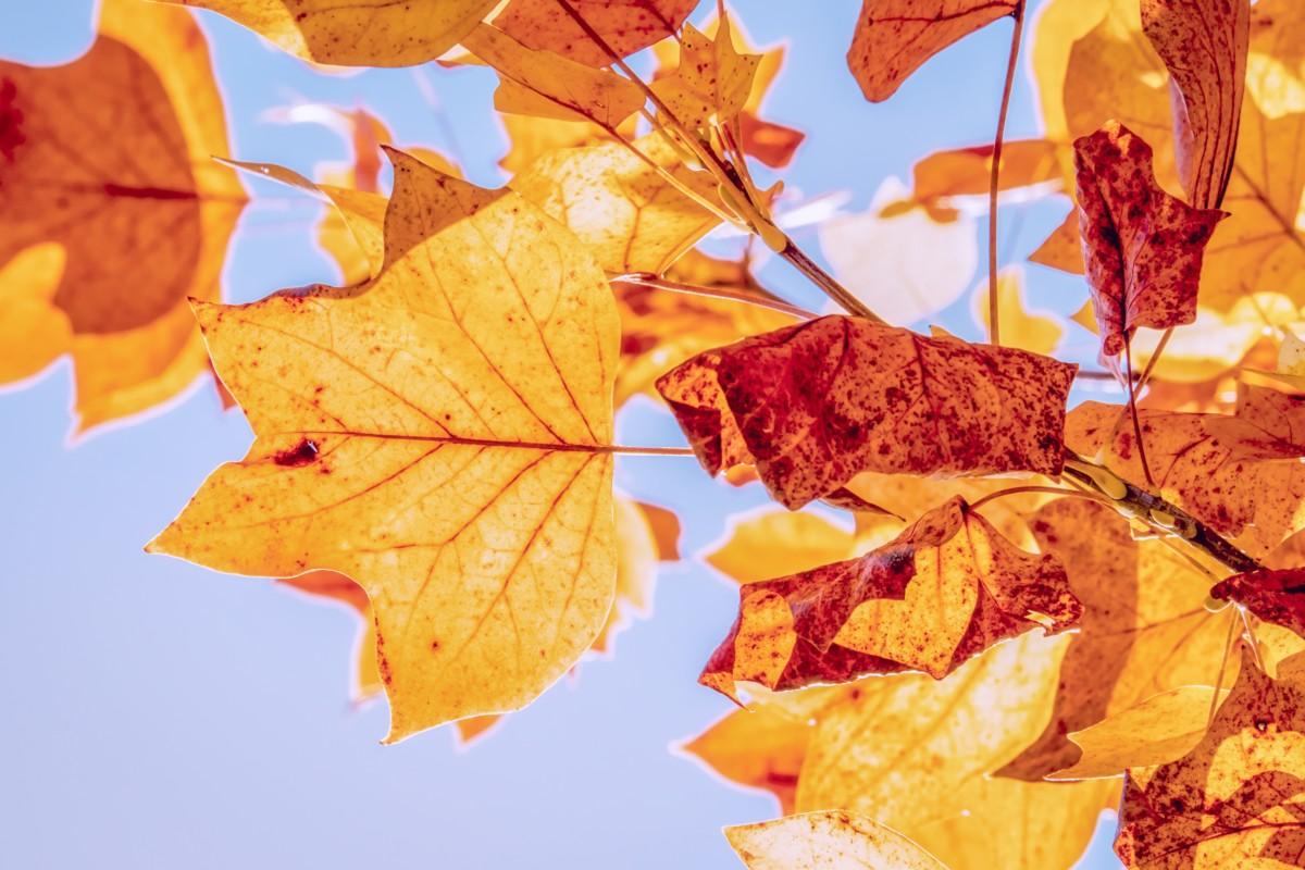 November első hétvégéjén is májusi idő lesz