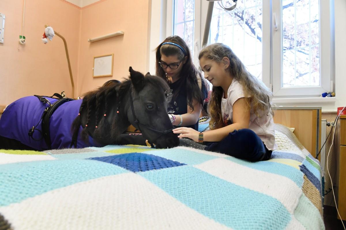 Barassó Bianka (b) és Ilyés Emma Vertigóval, a négyéves amerikai minilóval ismerkedik a speciális lovasterápia bemutatóján a Bethesda Gyermekkórház rehabilitációs osztályán 2018. december 13-án.