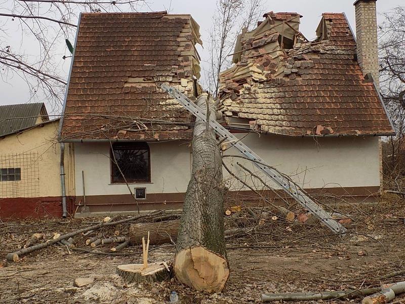 Kettévágott egy családi házat Üllőn egy kidőlt fa
