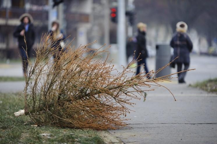 Másfél hónapig gyönyörködhetnek a budapestiek a kidobott karácsonyfákban