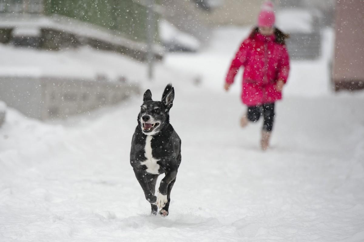 Egy kutya és gazdája a hóesésben Salgótarjánban 2019. január 5-én.