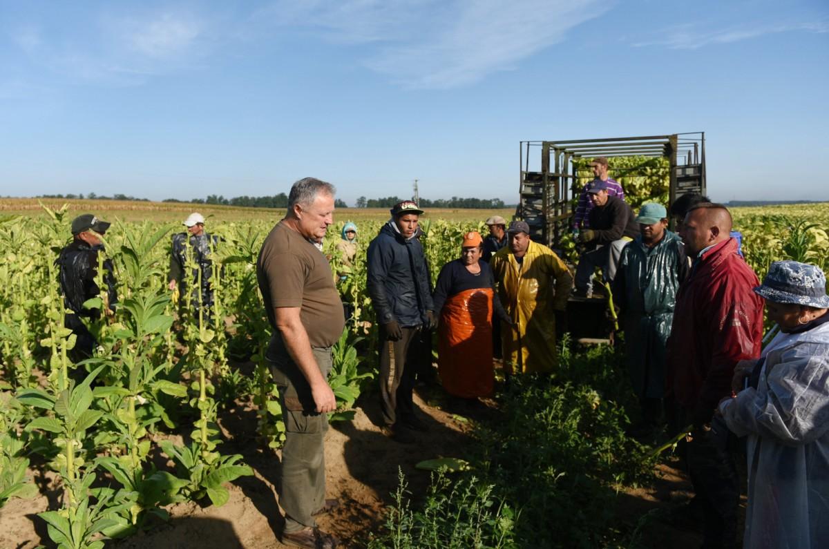 Kocsis Miklós tulajdonos (b3) beszél a Virginia dohányt törő mezőgazdasági munkásokkal a Fejértó Szövetkezet dohányföldjén a Szabolcs-Szatmár-Bereg megyei Ófehértó határában 2017. szeptember 8-án.