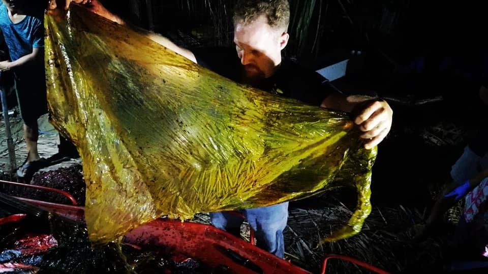 40 kiló műanyag zacskót találtak egy bálna gyomrában