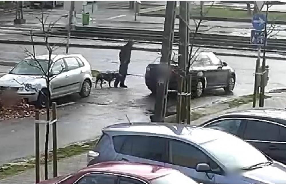 Kutyás verekedőt keres a rendőrség