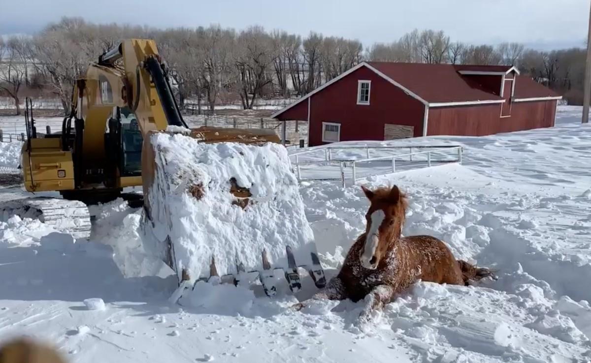 Markolóval ástak ki egy lovat a hóból Wyomingban, videón a mentés