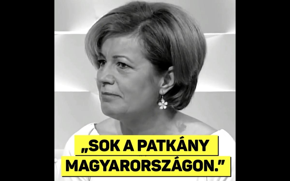 Egy nap alatt egymilliót költött a Fidesz Bangóné patkányozásának reklámozására