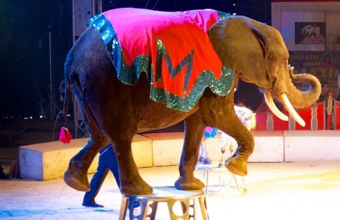 Betiltják a vadállatok cirkuszi szerepeltetését Szlovákiában