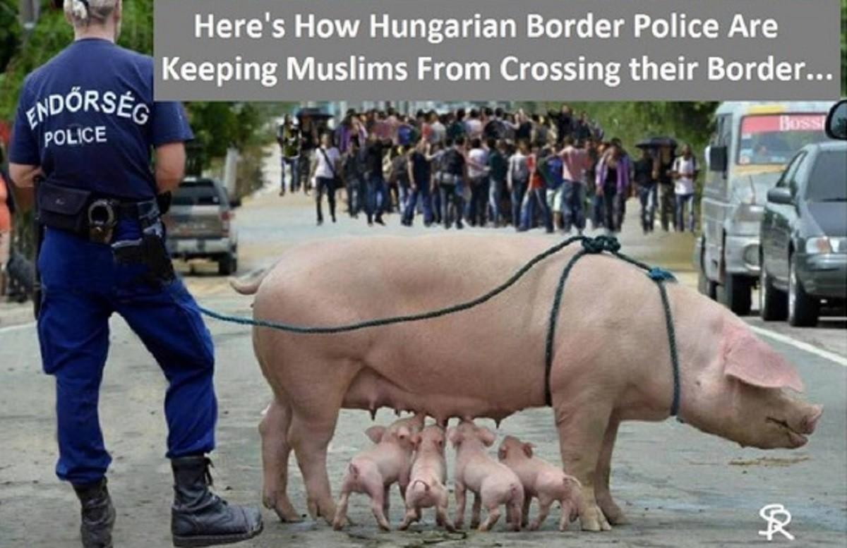 Azt terjesztik a magyarokról, hogy disznókkal védik a határt a muszlimokkal szemben