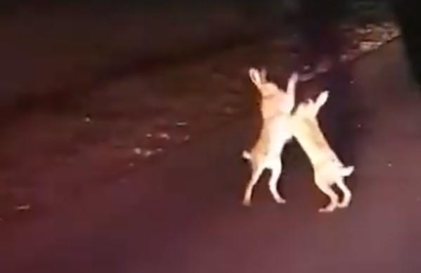 Óriási nyúlbunyót videóztak Nagyatádnál