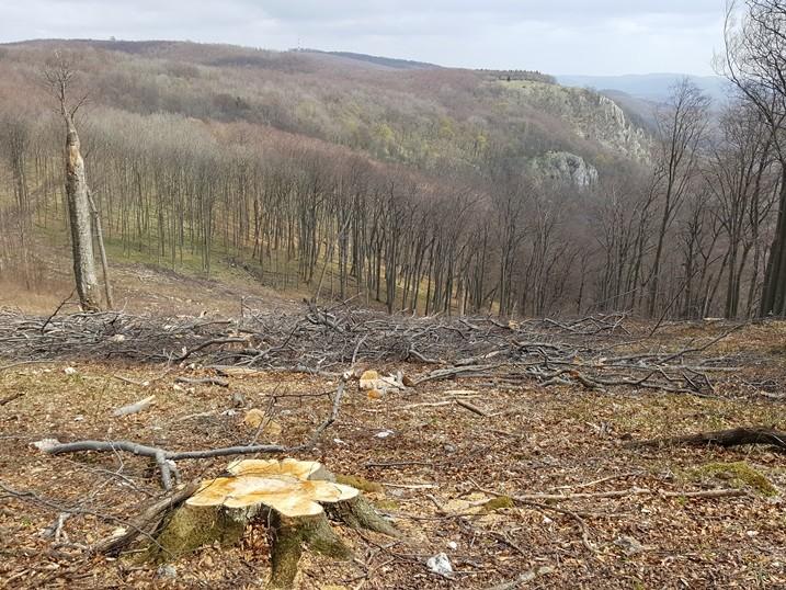 A kivágott erdő.