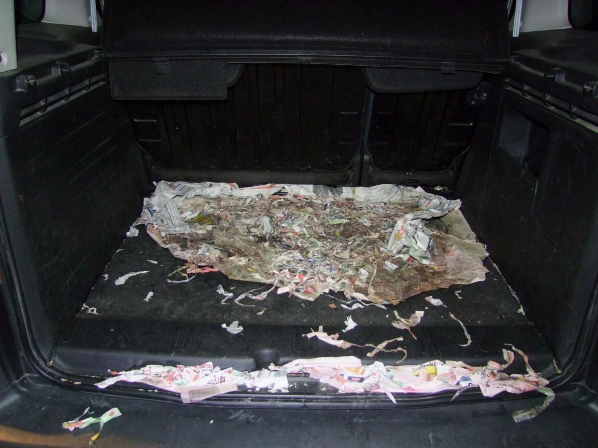 Csomagtartóba zsúfolva próbálták becsempészni a kutyákat.