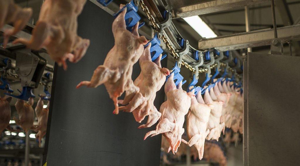 Drágább lesz a disznó- és baromfihús