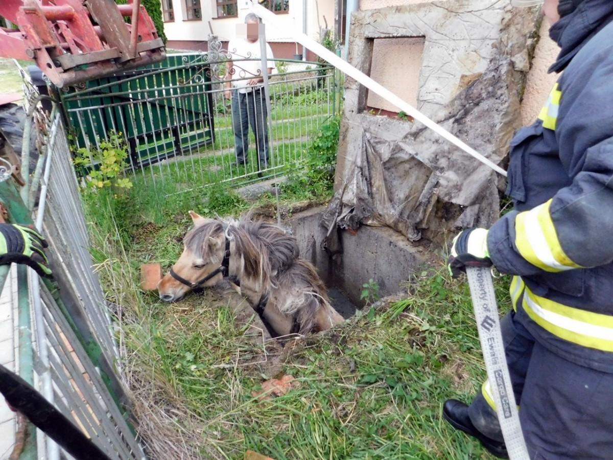 Vízaknába zuhant egy ló Kerkakutason, sikerült kimenteni