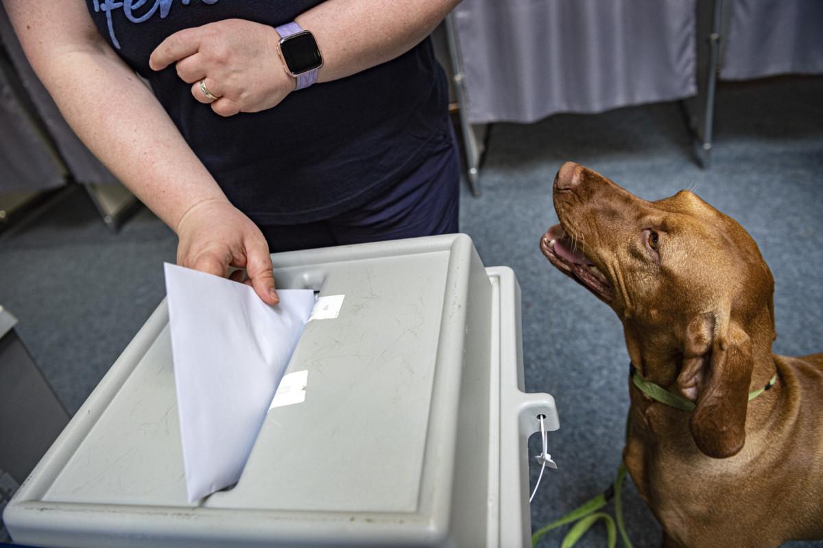 Szavazó kutyájával az európai parlamenti választáson a II. Rákóczi Ferenc Gimnáziumban kialakított 11-es szavazókörben 2019. május 26-án.