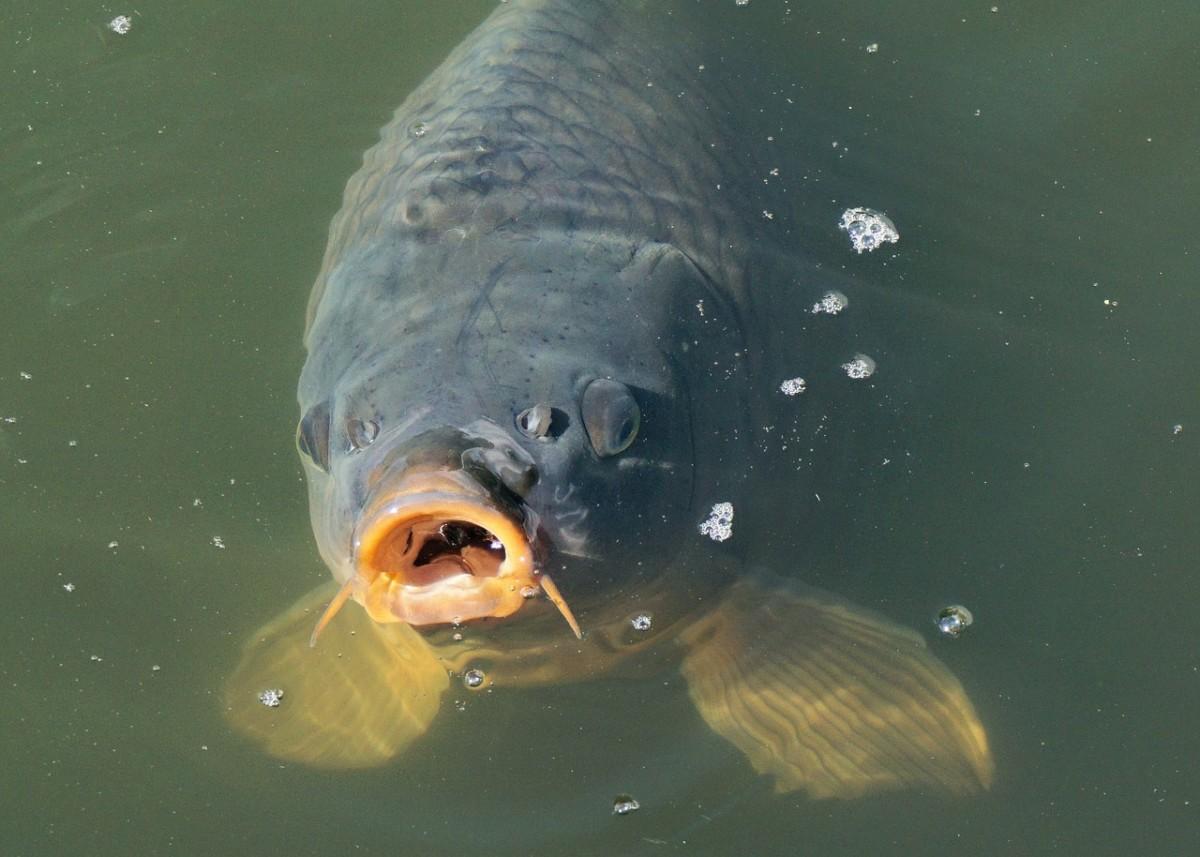 Agrárminiszter: aki balatoni halat enne a Balatonnál, fogjon magának