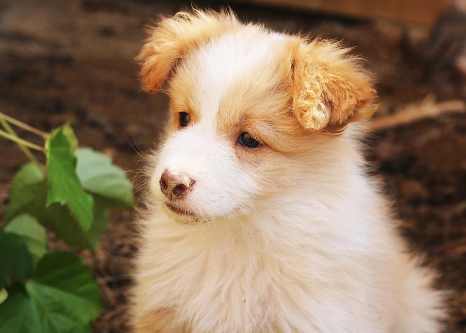 Vascsővel vertek agyon egy kiskutyát Siófokon, egy kutyabarát szálláshelyen