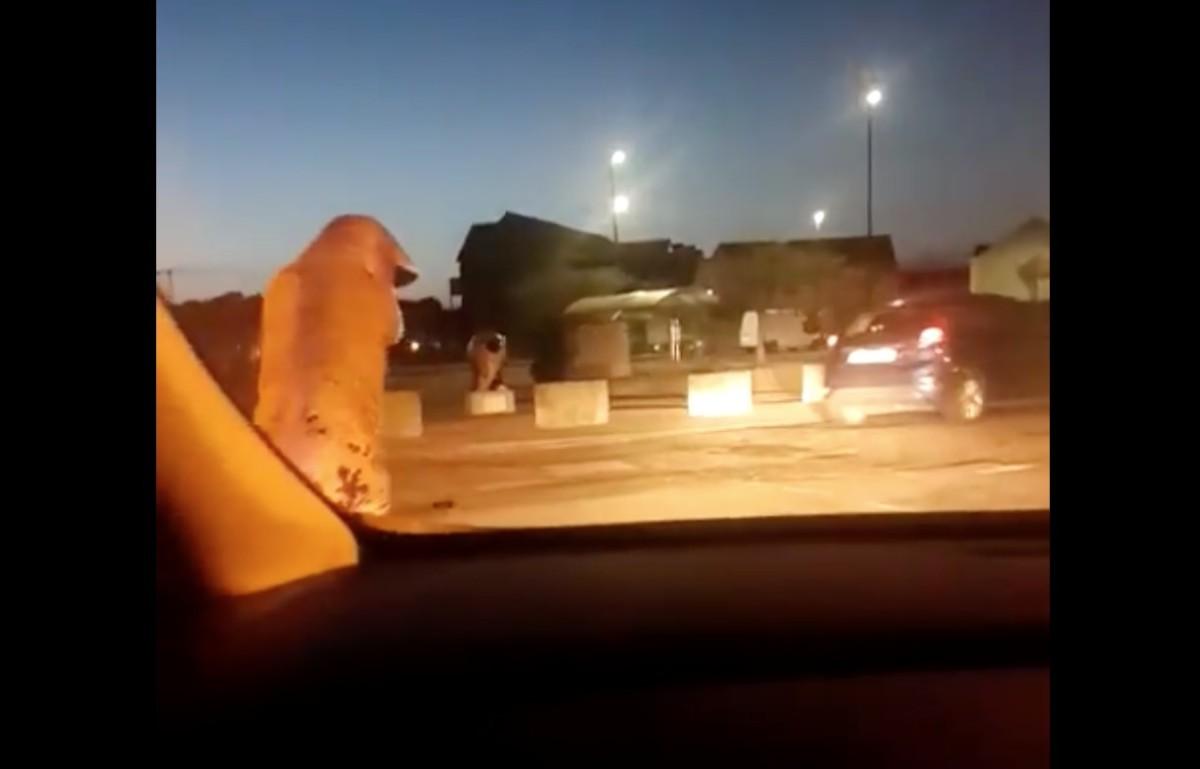 Zokogva röhögtek a rendőrök, miközben egy T-Rexnek öltözött embert üldöztek