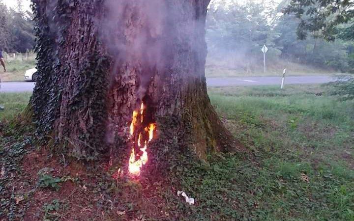 Valaki felgyújtott egy 300 éves védett tölgyfát Barcsnál