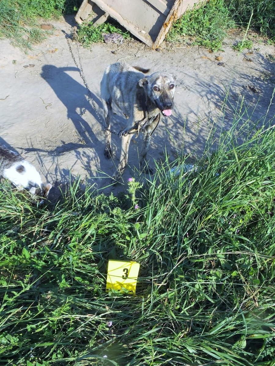 Pokoli körülmények között tartotta kutyáit egy berettyóújfalui nő.