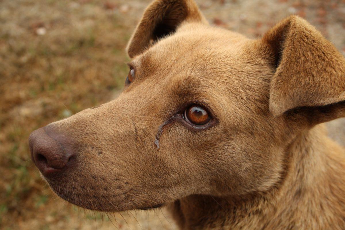 Baltával vertek agyon egy kutyát Dencsházán, a polgármester szerint ez nem állatkínzás