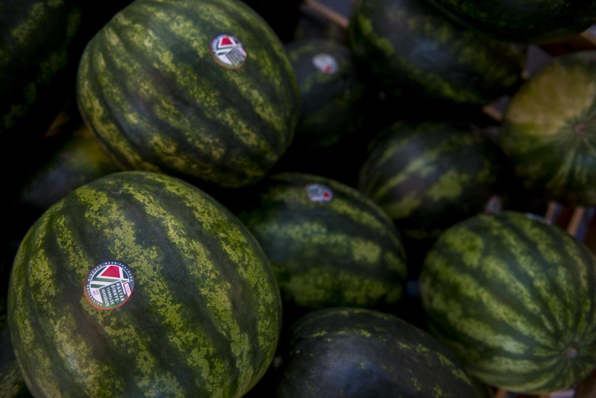 A Magyar Dinnyetermelők Egyesületének matricájával ellátott görögdinnyék az ormánsági dinnyét népszerűsítő kóstolón a pécsi Kossuth téren 2019. július 19-én.