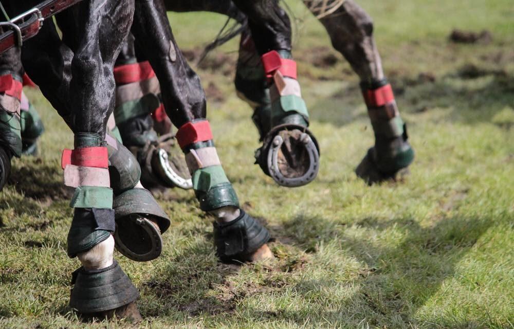 Közönség közé szaladtak a lovak a szajoli fogathajtó versenyen, több ember megsérült
