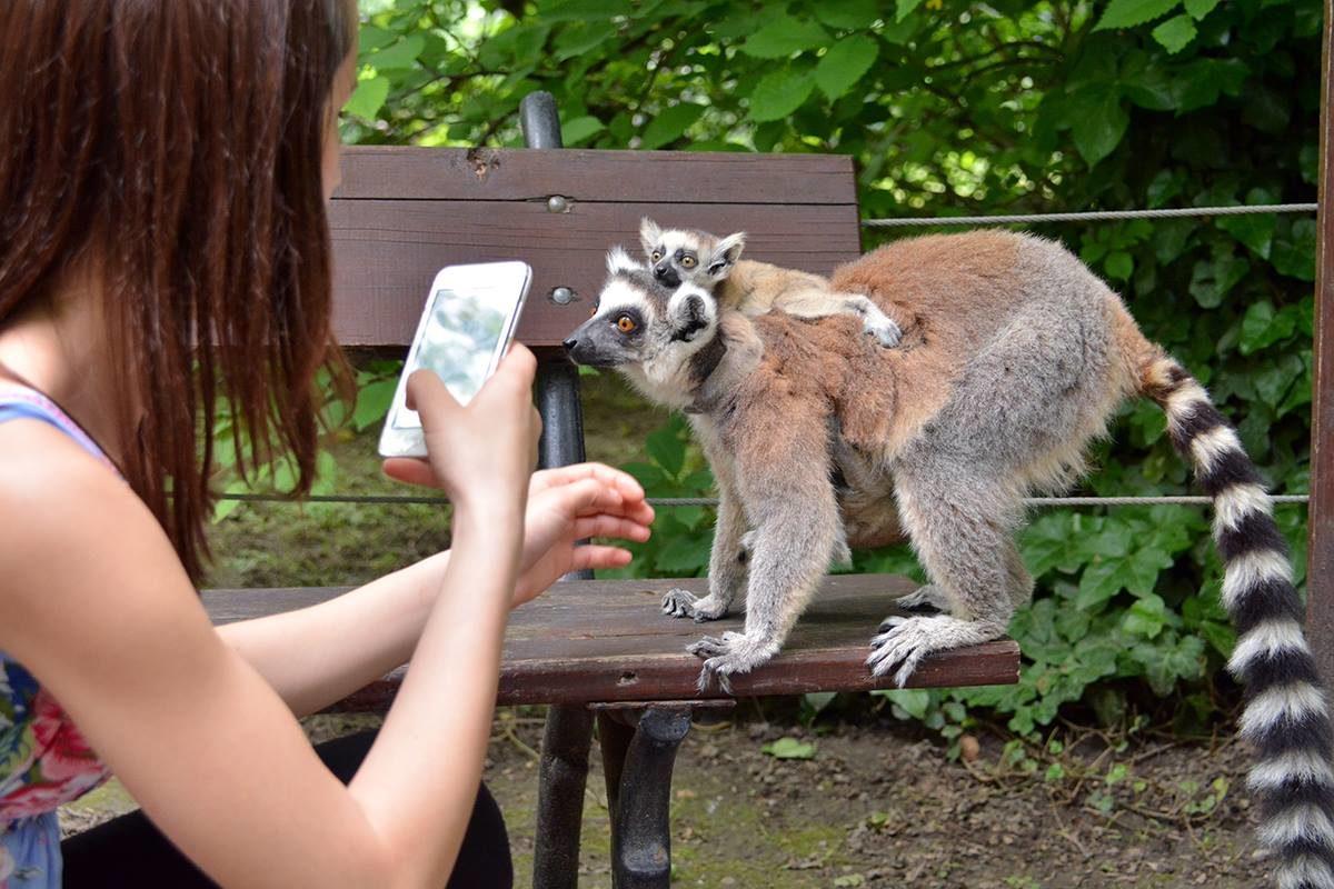 A csecsemőknek is jegyet kell venni a magyar állatkertekben, miközben Európa-szerte ingyenes a bejutásuk