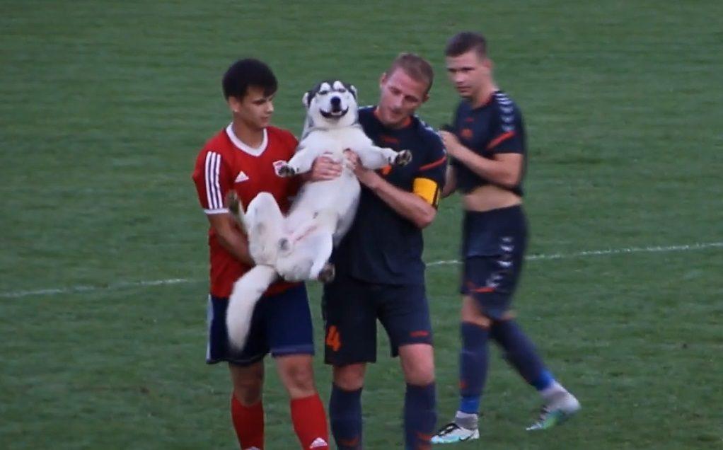 Egy kajla kutya miatt kellett megállítani a Sárisáp-Esztergom focimeccset