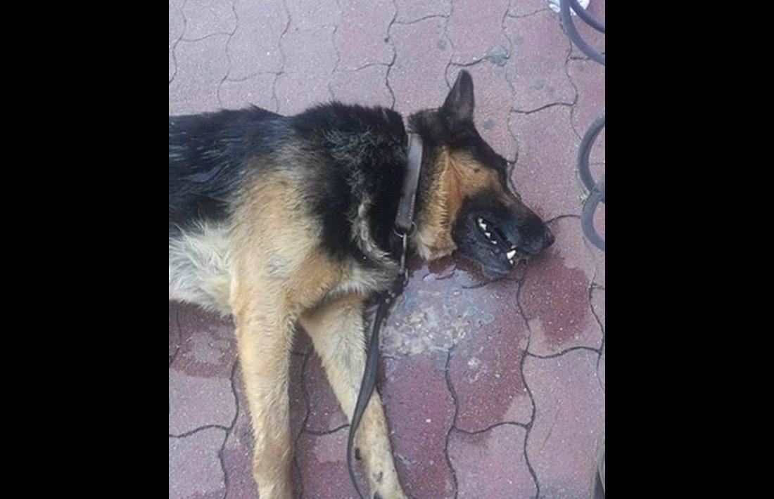 Tűző napra kikötött kutya pusztult el a szentesi Tescónál