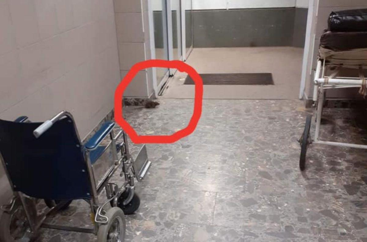 Patkányt fotóztak a berettyóújfalui kórházban