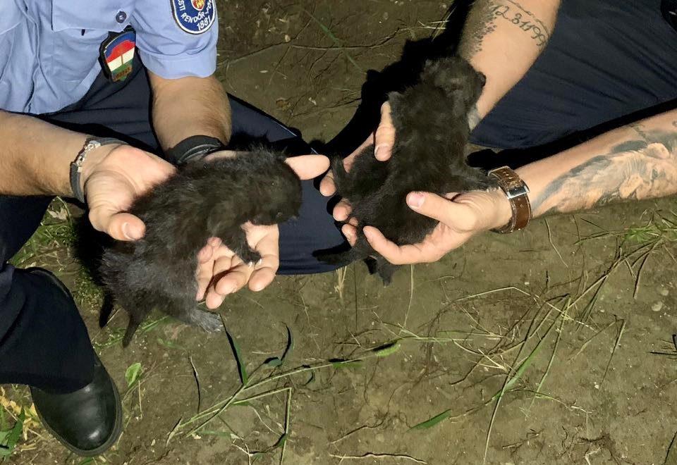 Élve elásott három kismacskát egy nő Budapesten