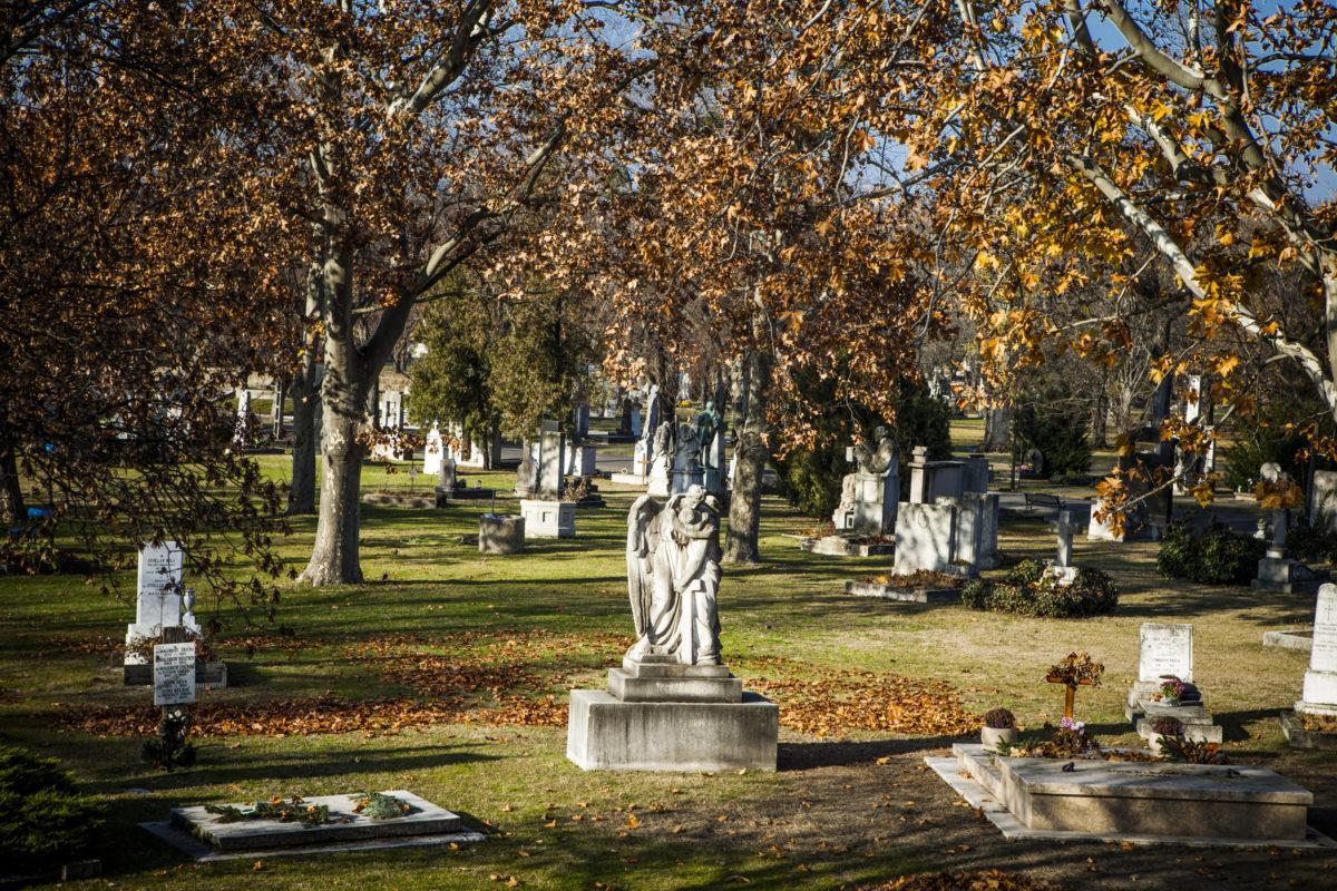 Futópályát alakítanak ki a Fiumei úti temetőben