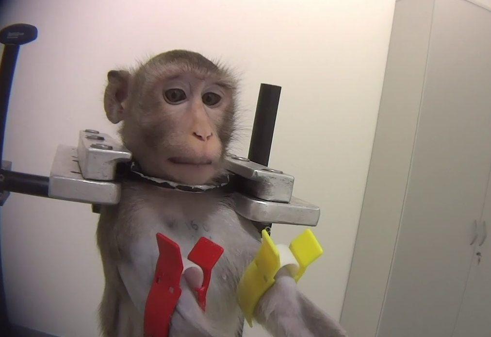 Sokkoló videó került ki egy állatkínzó hamburgi laborból