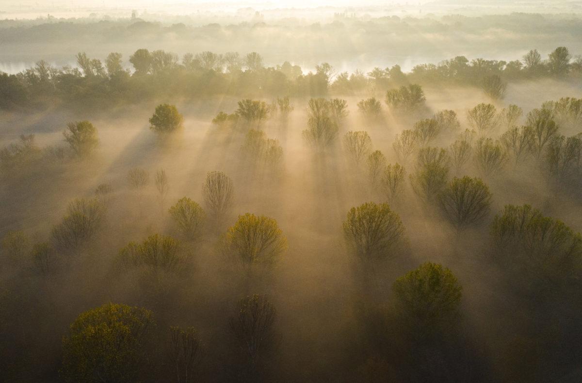 Köd a Szentendrei-szigeten, Surány határában 2019. október 19-én.