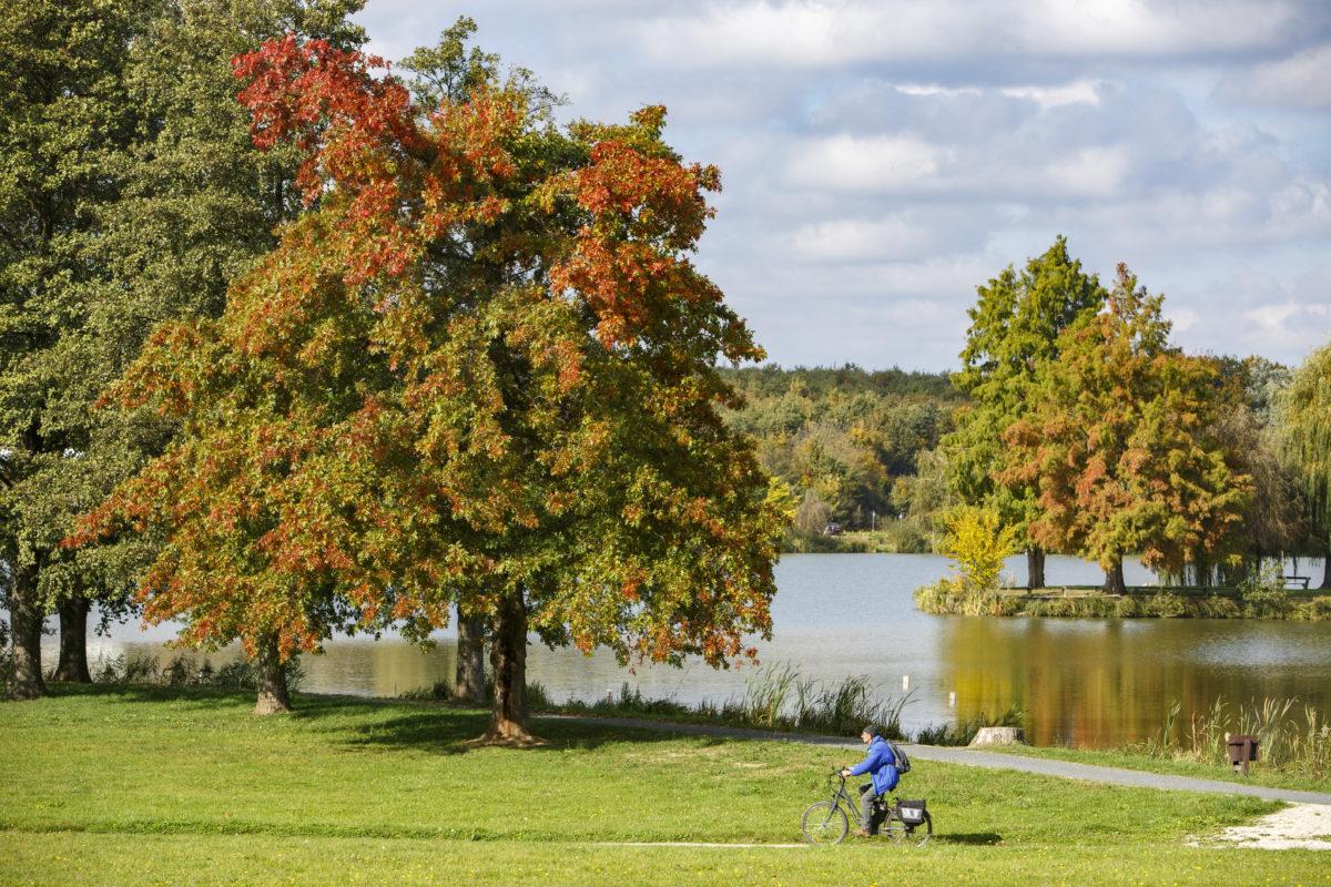 Őszi színekben pompázó fák a nagykanizsai Csónakázó-tónál 2019. október 17-én.