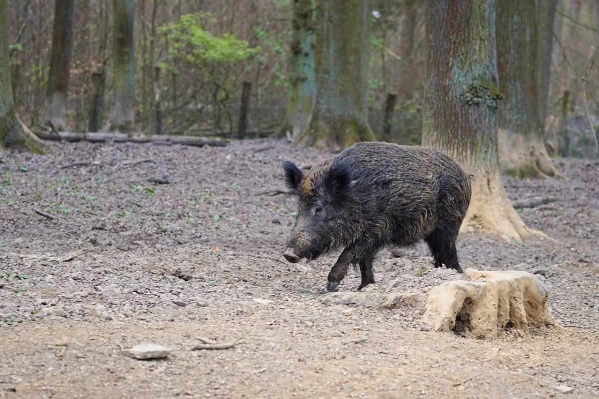Orvvadászattal gyanúsítanak egy fideszes polgármestert – azt állítja, csak az életét védte
