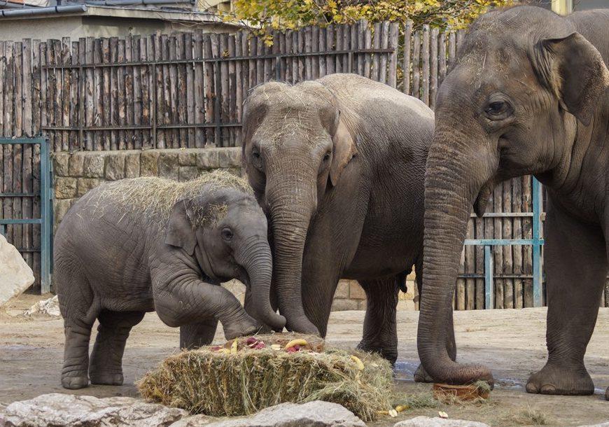 Arun, Angele és Assam a Fővárosi Állat- és Növénykertben.