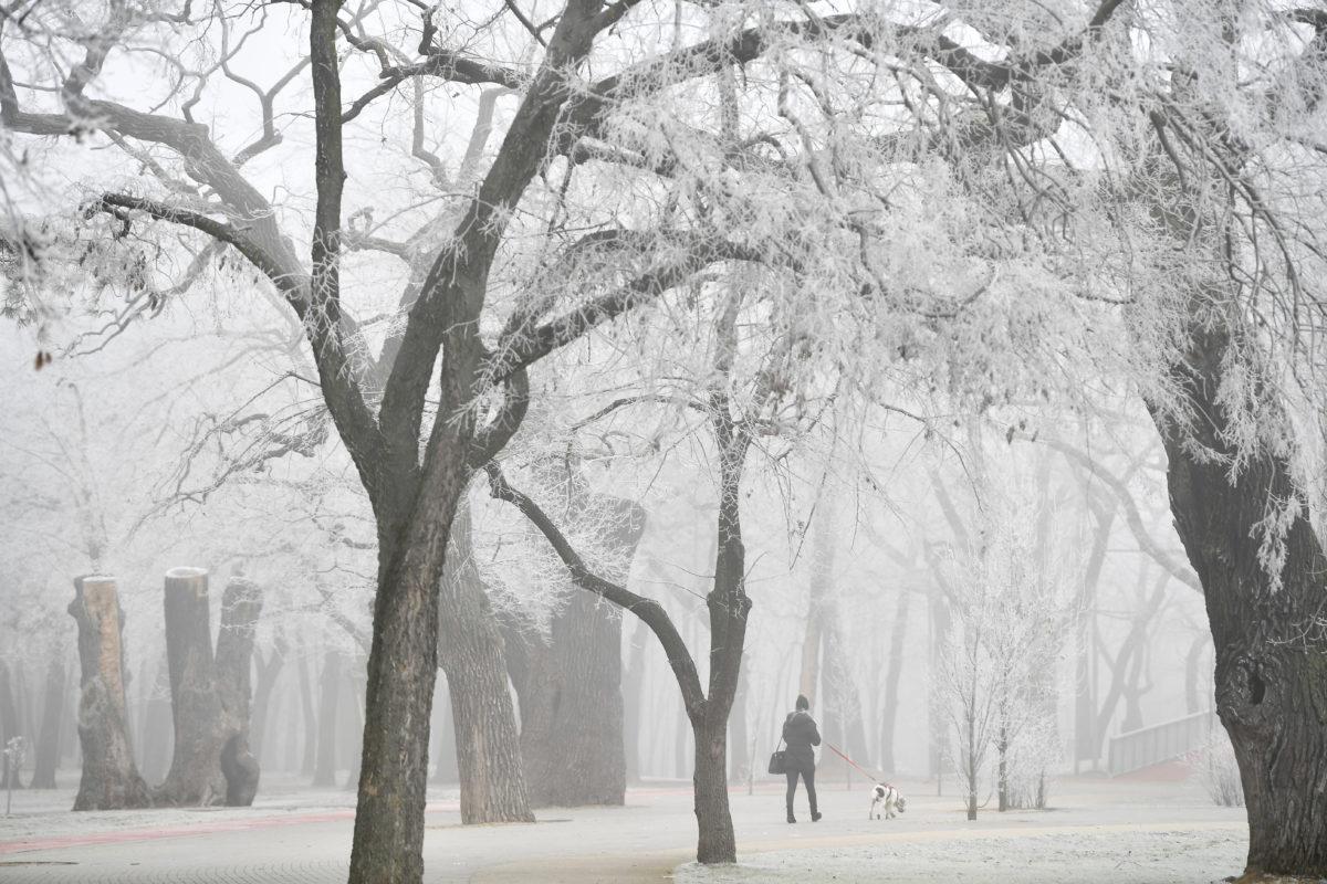 Nő kutyát sétáltat a deres, ködös debreceni Nagyerdőben 2020. január 2-án.