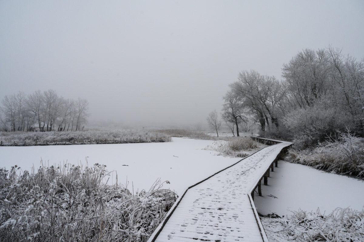 Hó borítja a tanösvényt a helyi és országos védettséget is élvező Sóstó természetvédelmi területen Székesfehérváron 2020. január 14-én.