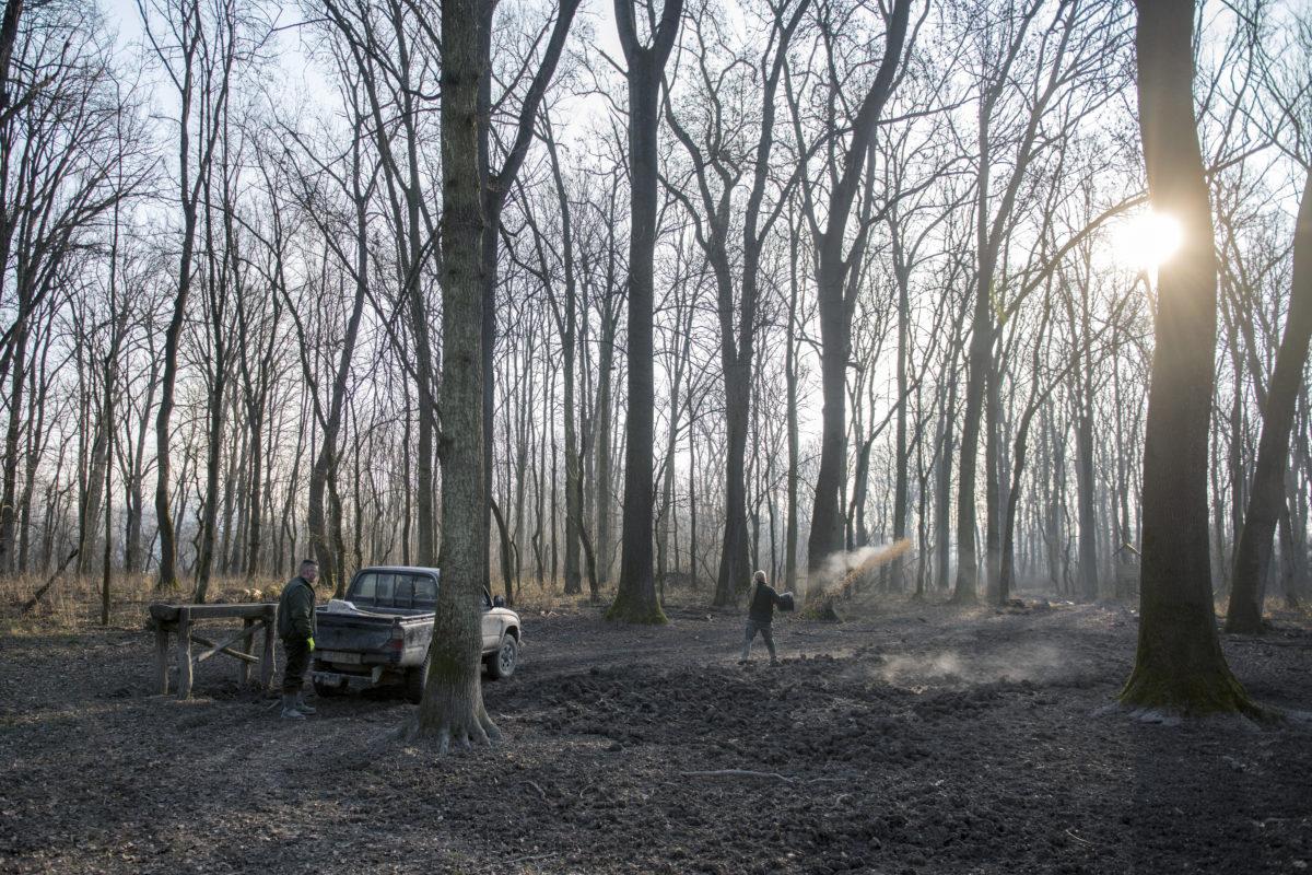 Takarmányt szór ki a téli vadetetés során a Gemenci Erdő- és Vadgazdaság Zrt. munkatársa a társaság Báta közelében fekvő erdészetében 2020. január 8-án. Naponta tesznek ki takarmányt 12 etetőhelyen közel 1500 hektárt lefedve.