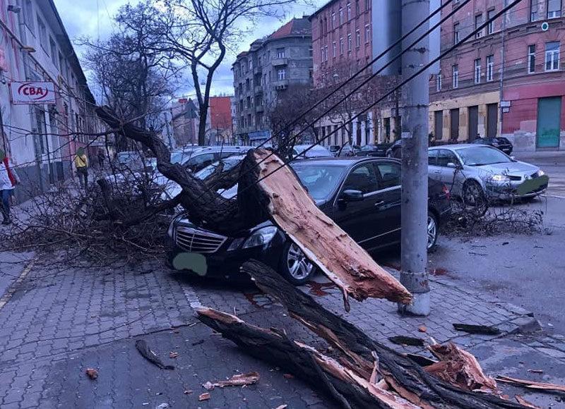 Fa dőlt egy autóra Budapesten, a VII. kerületi Orczy úton 2020. február 4-én.