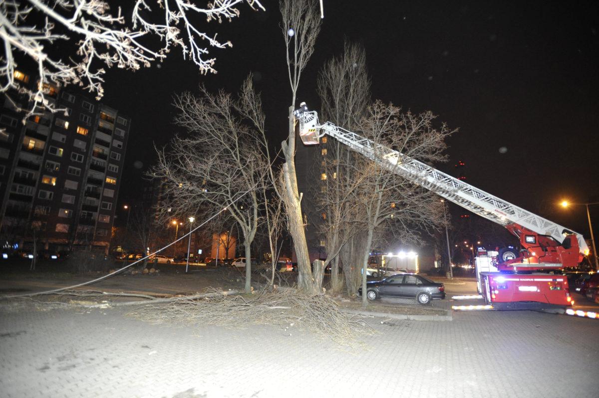 A viharos szélben megsérült fát vágnak ki a tűzoltók a IV. kerületi Rózsa utcában 2020. február 4-én.