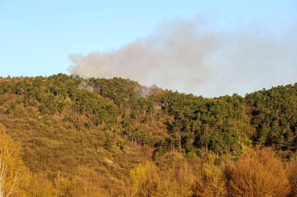 Füst gomolyog az erdő felett Budaörsön 2020. április 10-én.