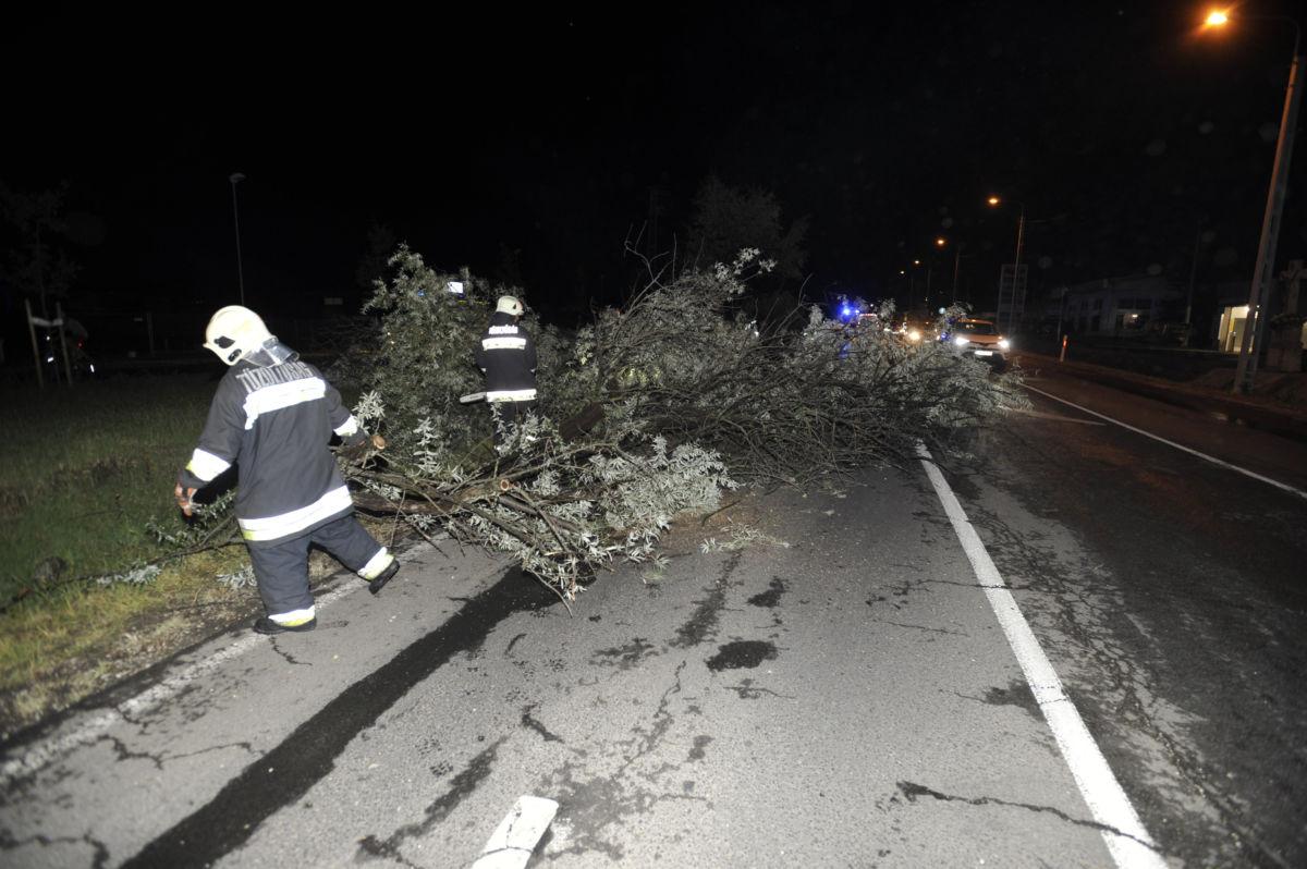 Tűzoltók távolítják el a vihar miatt az úttestre dőlt, kitört fákat Dunakeszi és Göd között 2020. augusztus 29-én.