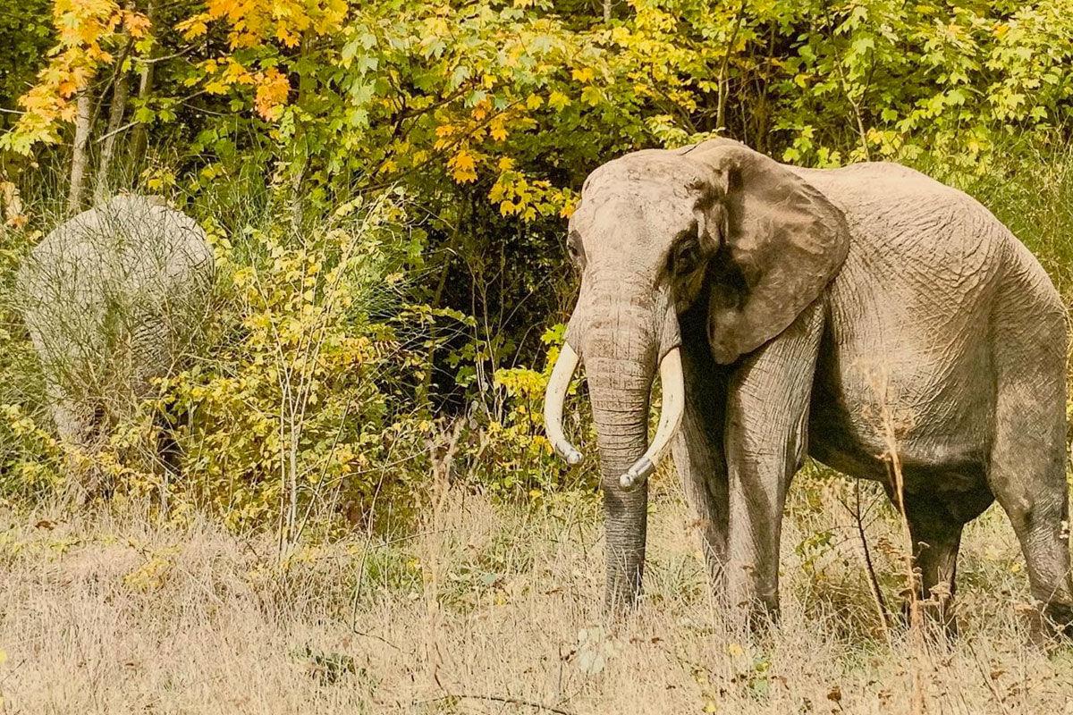 Elpusztult a szadai szafaripark két elefántja