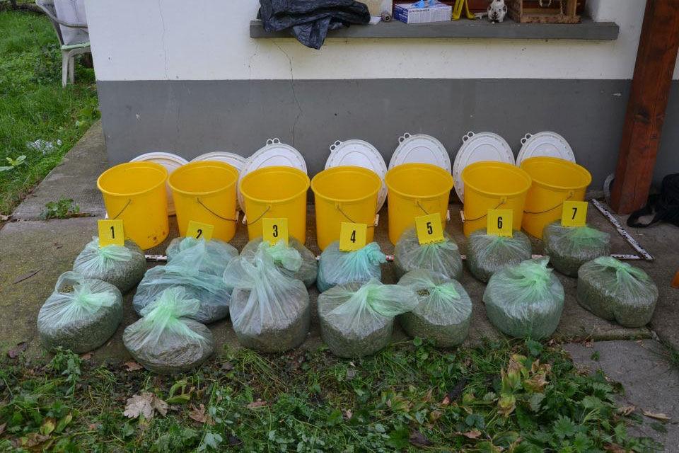 Nyolc kiló marihuánát találtak a rendőrök egy szegvári tanyán