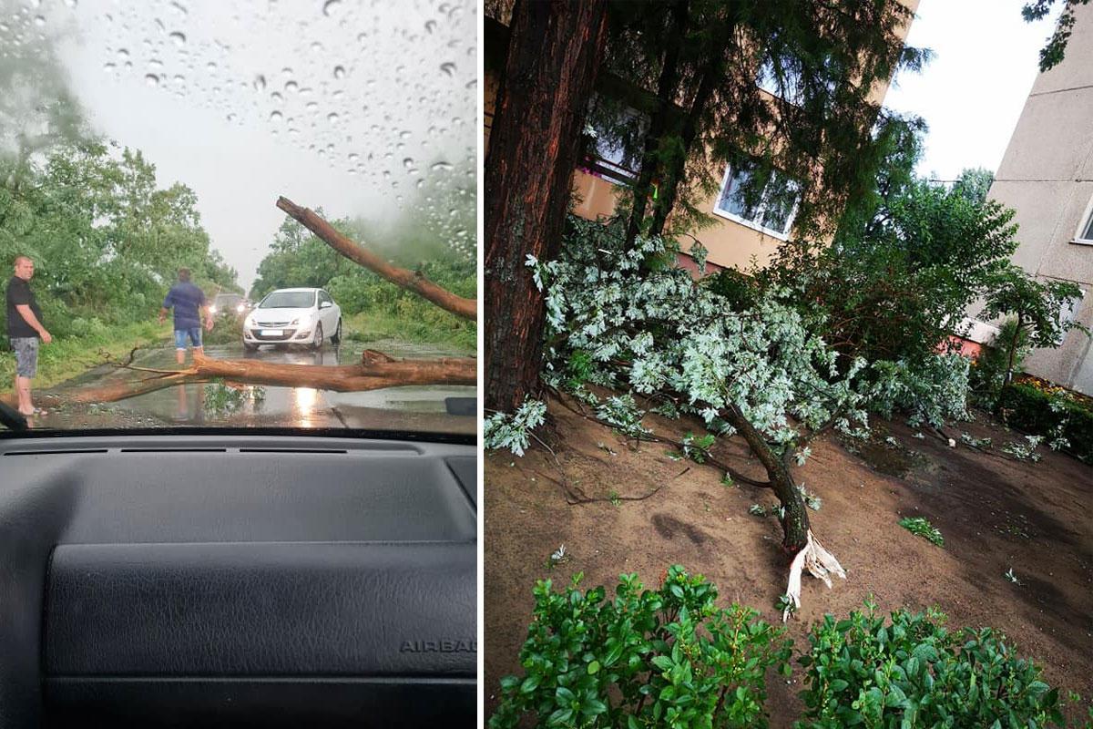 Úttestre dőlt fa Szabolcsban, Tiszavasvárinál (balra), kidőlt fa Nyíregyházán (jobbra).